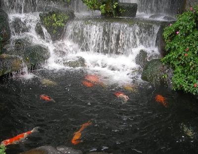 lung_shan_fish.jpg